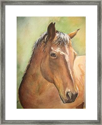 Sunlit Horse Framed Print by Patricia Pushaw