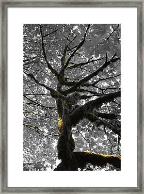 Sunlit Moss Framed Print by Charlaina Swinney