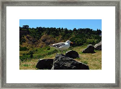 Sunning Seagull Framed Print by Tikvah's Hope