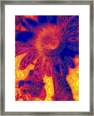 Sunny And Wild Framed Print by Stephen Anderson