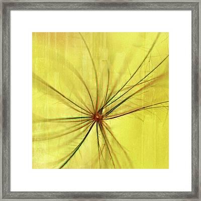 Sunny Framed Print by Bonnie Bruno