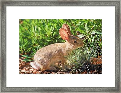 Sunny Bunny Framed Print by Donna Kennedy