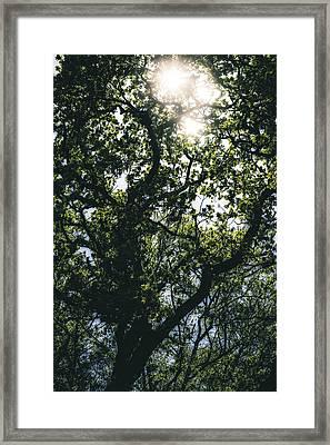 Sunny Day Framed Print by Joana Kruse