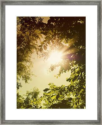 Sunny Forest Framed Print by Wim Lanclus