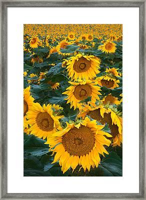 Sunny Framed Print by Steve Gadomski