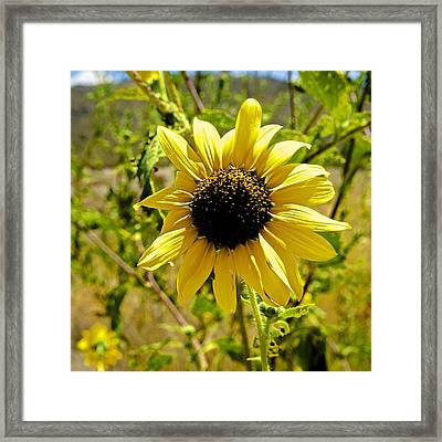 Sunny Surprise In The Middle Of Nowhere Framed Print by Barbara Zahno