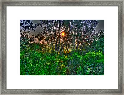 Sunrise In The Swamp-4 Framed Print by Robert Pearson