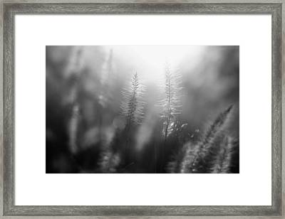 Sunrise Serenity Framed Print by Mountain Dreams