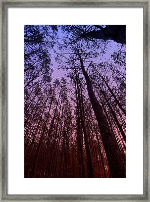 Sunset Forest Framed Print by M K  Miller