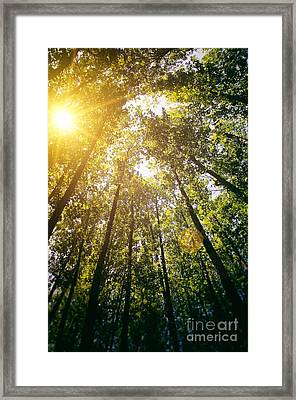 Sunset In The Woods Framed Print by Carlos Caetano