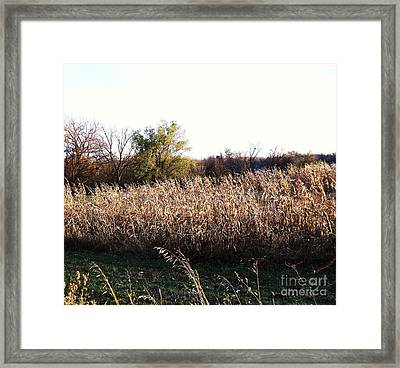 Sunset On Amber Waves Of Grain Framed Print by Marsha Heiken