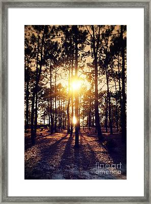 Sunset On Trees Framed Print by Carlos Caetano