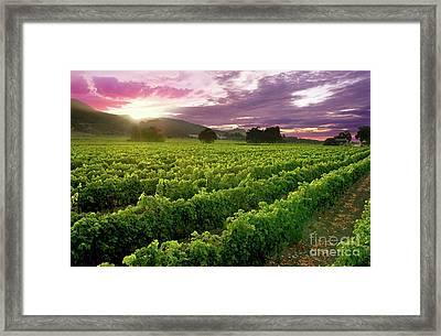 Sunset Over The Vineyard Framed Print by Jon Neidert