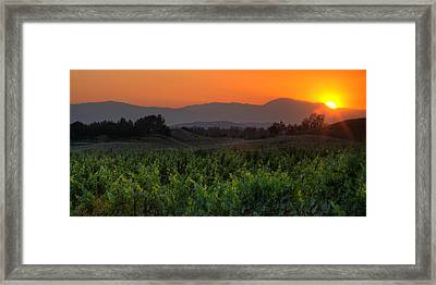 Sunset Over The Vineyard Framed Print by Peter Tellone