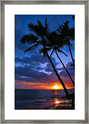 Sunset Palm Framed Print by Sean  James G