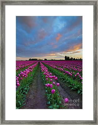 Sunset Pink Framed Print by Mike Dawson