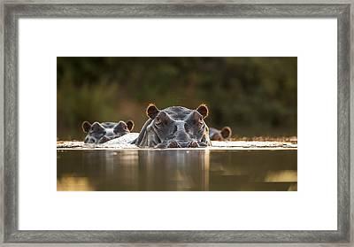 Sunset Pool Framed Print by Hillebrand Breuker