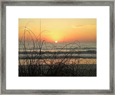 Sunset Sea Grass Framed Print by Sean Allen