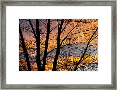 Sunset Through The Tree Silhouette Framed Print by James BO  Insogna