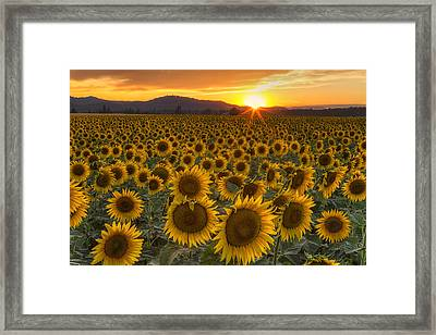 Sunshine And Happiness Framed Print by Mark Kiver