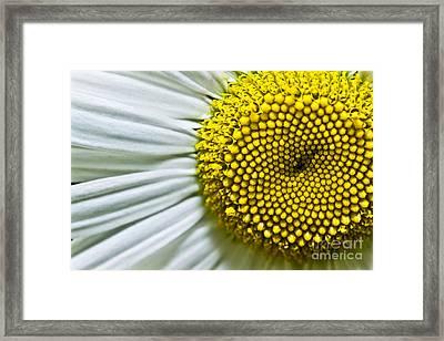 Sunshine Daisy Framed Print by Ryan Kelly