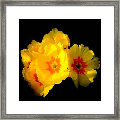 Sunshine English Garden Yellow Marigold Flowers In Bloom Framed Print by Andy Smy