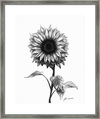Sunshine Love Framed Print by J Ferwerda
