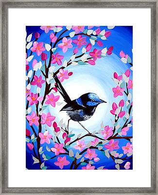 Superb Fairy Wren Framed Print by Cathy Jacobs