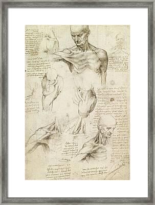 Superficial Anatomy Of The Shoulder And Neck, Recto Framed Print by Leonardo da Vinci