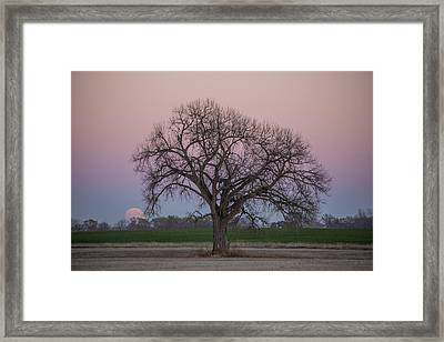 Supermoon Rise Framed Print by Aaron J Groen