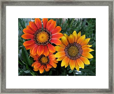 Surprise Framed Print by Carol Sweetwood