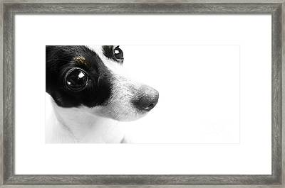 Surprised Dog Face Framed Print by Jorgo Photography - Wall Art Gallery