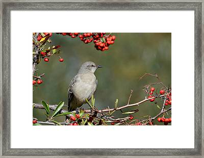Surrounded By Berries 2 Framed Print by Fraida Gutovich