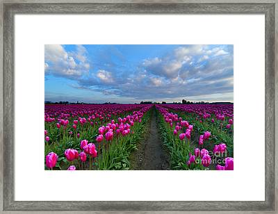 Surrounded By Pink Framed Print by Mike Dawson