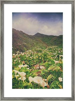 Survival Framed Print by Laurie Search
