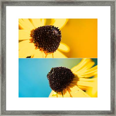 Susans Framed Print by Lisa Knechtel