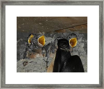 Swallows Opera  Framed Print by Ernie Echols