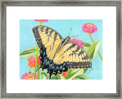 Swallowtail Butterfly And Zinnias Framed Print by Sarah Batalka