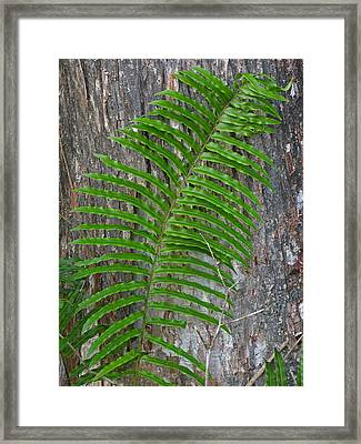 Swamp Fern Framed Print by Juergen Roth