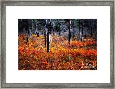 Swamp Music - A Late Autumn Impressionist Scenic Framed Print by Thomas Schoeller