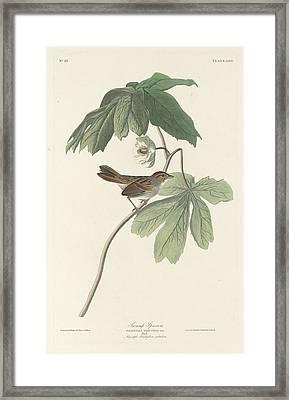 Swamp Sparrow Framed Print by John James Audubon