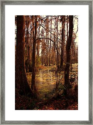 Swamp Framed Print by Susanne Van Hulst
