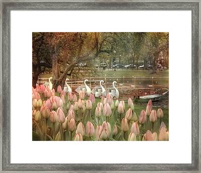 Swan Boats And Tulips - Boston Public Garden Framed Print by Joann Vitali
