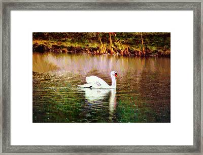 Swan Lake Framed Print by Bill Cannon