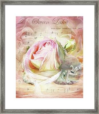 Swan Lake Rose Framed Print by Carol Cavalaris