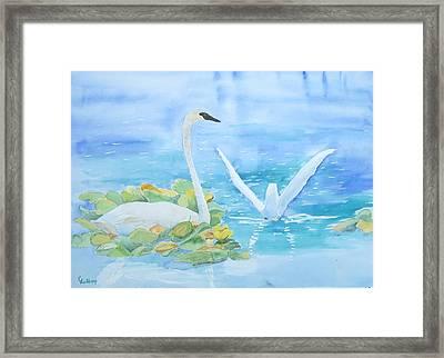 Swans Framed Print by Christine Lathrop
