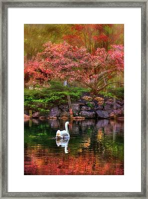 Swans In The Boston Public Garden Framed Print by Joann Vitali