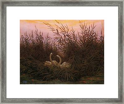 Swans In The Reeds At Dawn Framed Print by Caspar David Friedrich