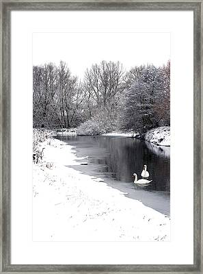 Swans In The Snow Framed Print by Gary Eason