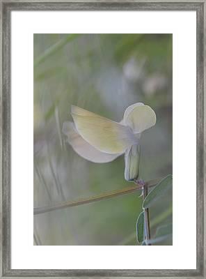 Swaying Framed Print by Eva Maria Nova